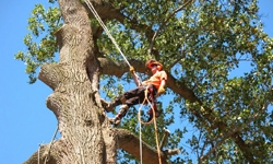 man-in-tree-on-rope