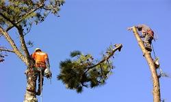 man-topping-tree